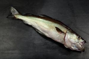 pescado abadejo