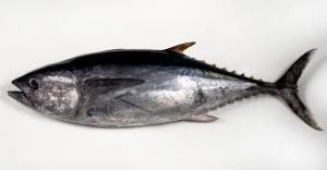 pescado atun