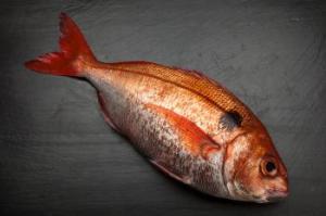 pescado besugo
