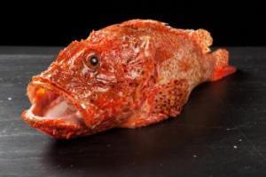 pescado cabracho