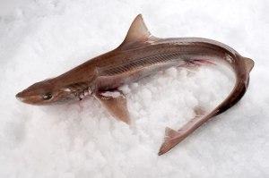 pescado cazon