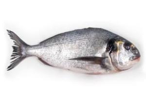 pescado dorada