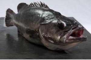 pescado mero