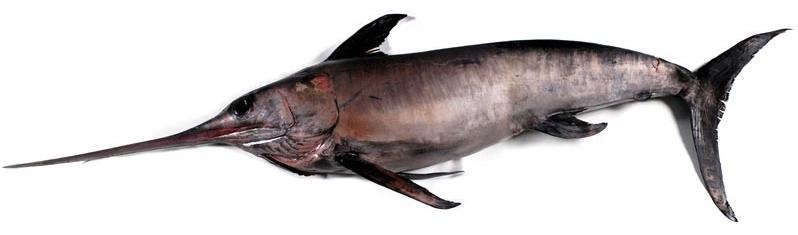 Pescados abrasamefuerte for Cocinar emperador