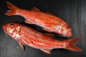 pescado salmonete