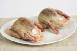 aves pichon